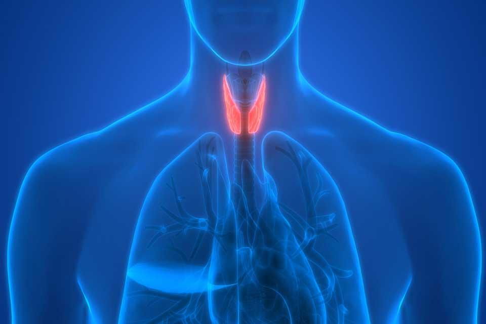 Dibujo tiroides